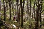 А шуме Дели Јована су посебна његова вредност