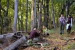 У шумским детаљима се максимално уживало