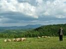Ни пастир не мари, већ НАС гледа у чуду