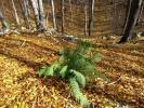 Још само она пркоси јесени