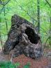 и наравно, обавезни експонати у шумској галерији