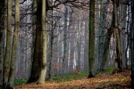 Даље, кроз шуму...