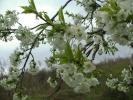 Пролеће, свуда око нас и у нама!