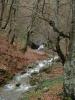 А мало даље, узводно ено водопада који избија из стене, а изнад је Мијуцића пећина !