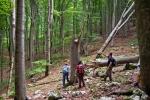 Шуме пред нама биле су надахњујуће