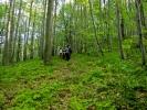 Још ниже, стаза нас води у огромне шуме