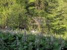 Ову воденицу обраста околно зеленило